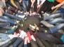 2.A - Ponožkový den