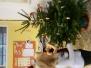 3.B - Vánoční přípravy